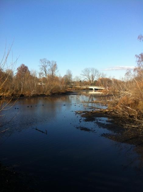 First I ran down through the Arboretum to the shores of Lake Washington.