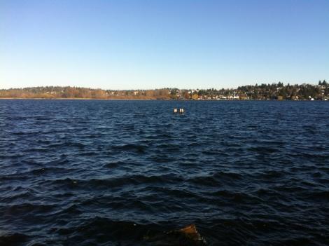 Lake Washington looked mighty cold.