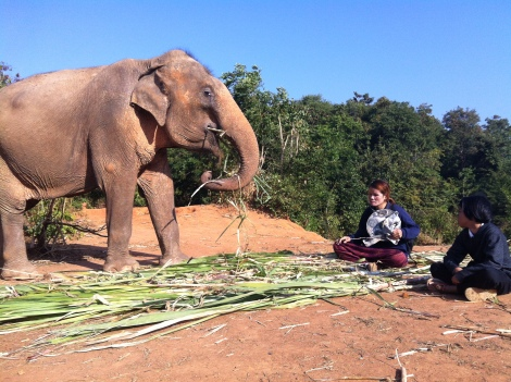 The old lady and her lady mahout and daughter.