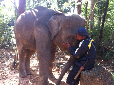 Tang Mo and her mahout Crow. There is a very special bond between Mahout and elephant - a deep love and respect.